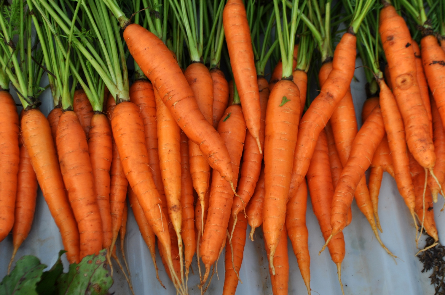 carrots-foods-you-dont-need-to-buy-organic-by-Green-Blender